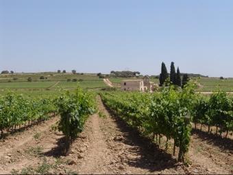 El canvi climàtic pot afectar negativament a la disponibilitat d'aigua i al procés de maduració del raïm ARXIU