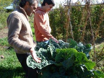 Artur Bòria i Gerard Batalla, tècnics d'Slow Food, davant una enorme col de Tiurana. EVA POMARES