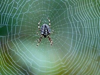 Les aranyes de jardí són generalment inofensives però bona part dels humans les associen amb un perill KAY NIETFELD
