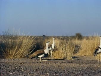Una nova espècie en perill d'extinció