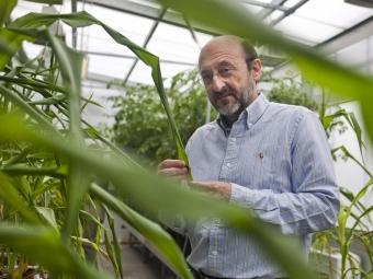 Experiència El director del CRAG, Pere Puigdomènech, es va doctorar en ciències biològiques a la UB i va completar els estudis i va treballar a França, Regne Unit i Alemanya. Entre el 1998 i el 2003 va ser director de l'Institut de Biologia Molecular. FOTO: ROBERT RAMOS