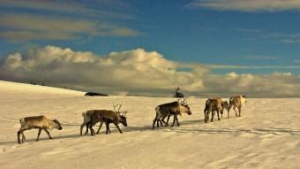 Rens salvatges en un dels turons propers a la localitat de Slagnas.  F. MORANTE