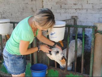 La Roser acarona un vedell a la granja que la família té a Vallfogona de Balaguer, prop de la casa de pagès J.T