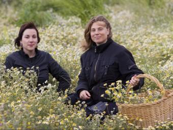 Montse i Griselda recollint plantes aromàtiques en un bancal de Prat de Comte.  JOSÉ CARLOS LEÓN