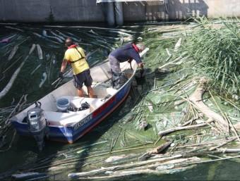 Dos operaris extraient algues acumulades al pantà de Riba-roja, dimarts al matí ACN
