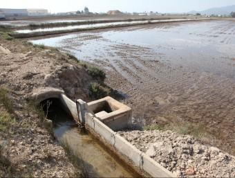 L'aigua cavallera nega els camps d'arròs. JUDIT FERNÁNDEZ