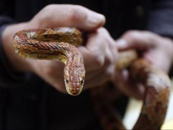 """""""Cal fer coses que no és fan mai, com per exemple, agafar una serp amb les pròpies mans"""".  Foto:ARXIU /ORIOL DURAN"""
