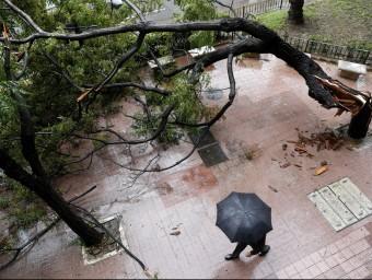 Les intenses pluges han enderrocat nombrosos arbres. AGÈNCIES