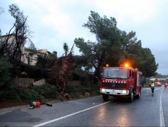 Un pi partit i reixes esbotzades a la urbanització Sole Mio de Mont-roig del Camp, com a conseqüència d'un petit tornado ACN