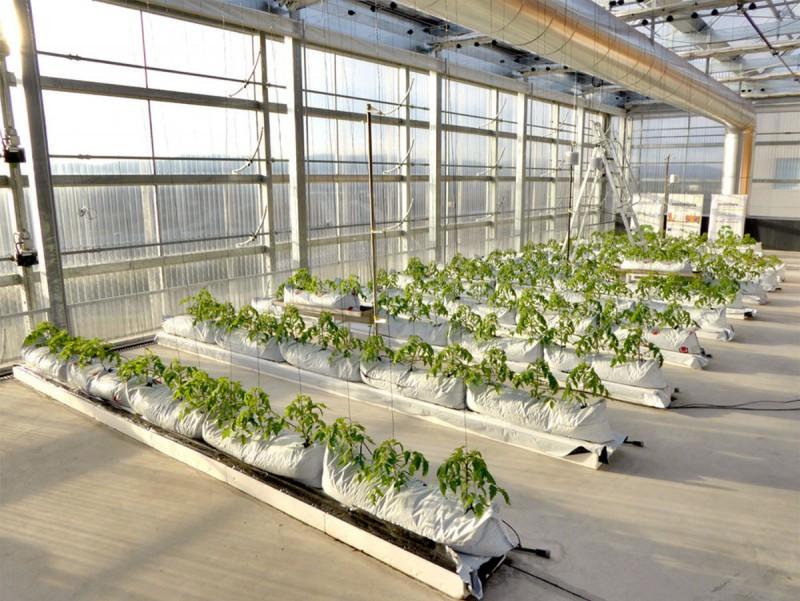 Al terrat de l'edifici de l'ICTA, el grup Sostenipra materialitza el seu projecte d'agricultura vertical.  ARXIU
