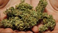 Macrooperació contra el tràfic de marihuana i blanqueig de capitals a les comarques gironines