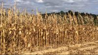 Un estudi apunta a la sequera i a la seguretat alimentària com a problemes clau del canvi climàtic al Mediterrani