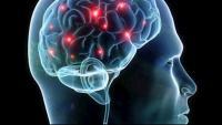 Bilingües i multilingües tenen major protecció davant la neurodegeneració