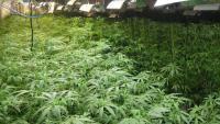 Una de les plantacions de marihuana desmantellades a Mataró